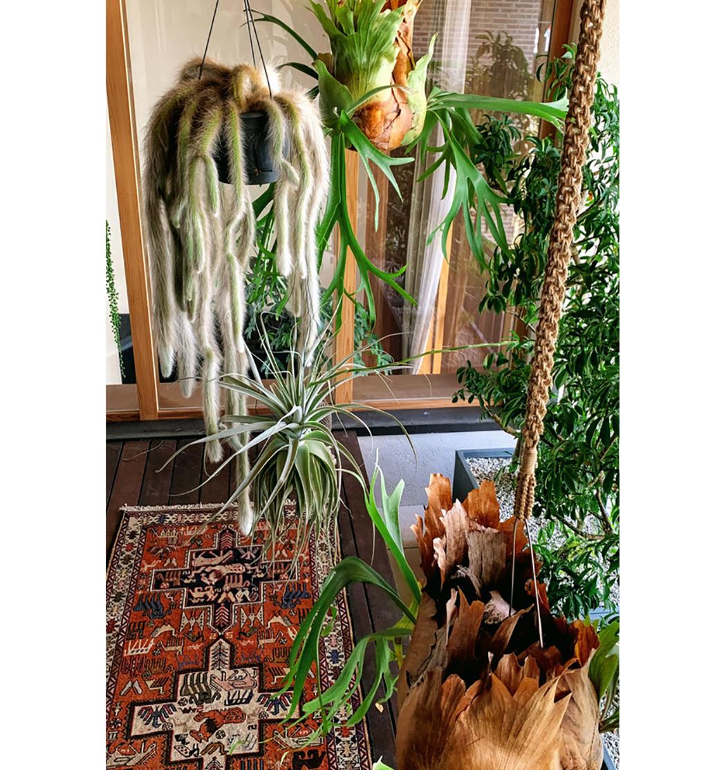 博物花屋マニエラs014